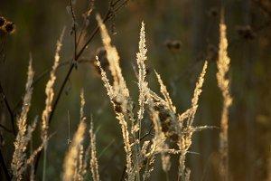 sunset grass backlight