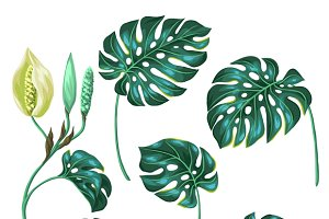 Stylized monstera leaves.