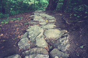Stone path in the forest