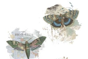 French Ephemera Butterfly Overlays