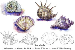 Watercolor & Vector Sea Shells