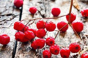 dry red rowan