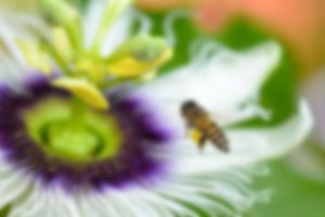Blur background bee flying