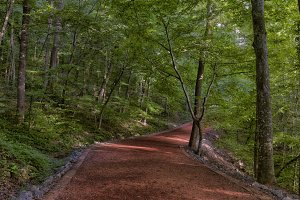 Road in the woods -2