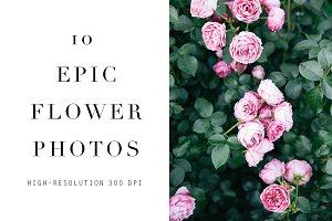 Stock Photos 10 Floral Images