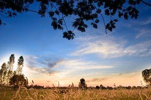 landscape grass field background