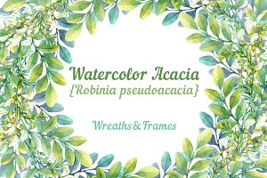 Watercolor acacia