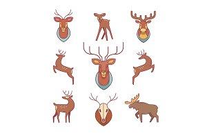 Deers, moose, antlers and horns