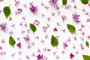 Floral pattern of lilac flowers