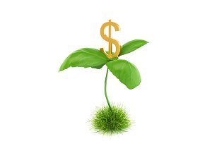 Money tree isolated
