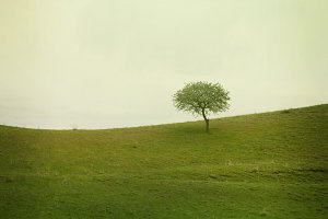 alone tree on meadow