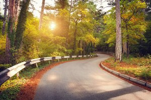 Beautiful road in mountain forest