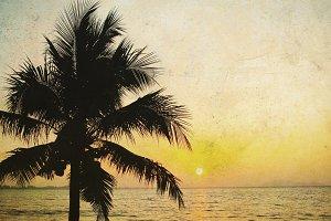 Coconut palm tree and sunrise