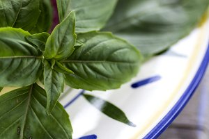 Basil Sprig on Colorful Plate