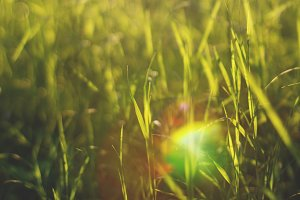 Sunlight flare on meadow