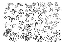 Vector drawing of leaves