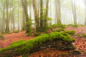 Fallen tree in a foggy green forest