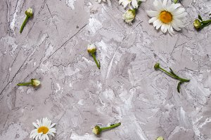 Daisy on gray concrete background