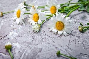 Daisy flowers.Summer card