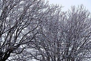 leafless tree snowy winter landscape