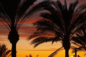 palm trees and clouds sunset