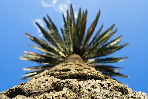 Detail of the Palm Tree