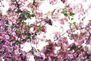 Spring in Full