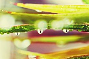Raindrops with bokeh
