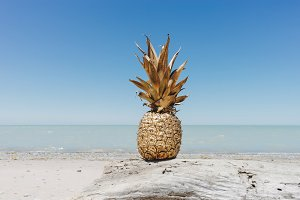 Golden Pineapple on Driftwood 3