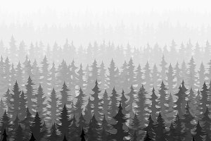 Nature forest landscape pine fir