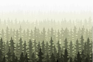 Nature forest landscape pine fir.