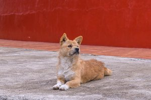 stray dog is breed native