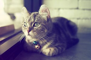 cute cat in vintage color tone
