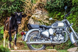 the bull and motorcycle