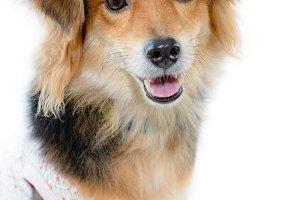Beautiful dog on white background
