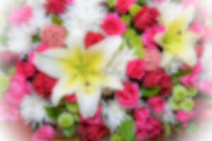 Blur background colorful flower