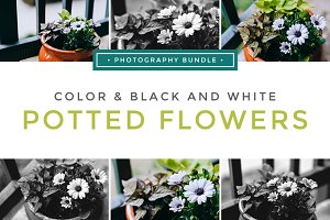Colorful/Black&White Potted Flowers