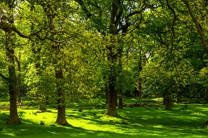 Beautiful Green Forest in Summer Sun