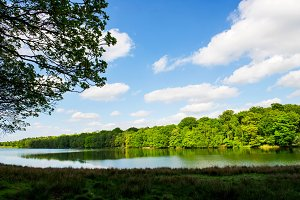 Green Landscape, Lake and Blue Sky