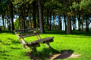 Wooden Bench near the Forest