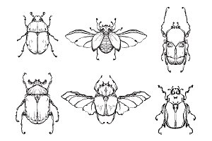 Set of hand drawn insect