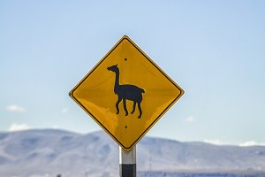 Careful llamas crossing