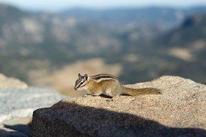 Chipmunk on Mountain Rock