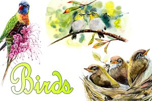 Spreeng birds