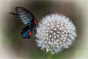 Butterfly and dandelion dream