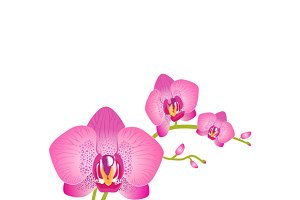 Set of Beauty Flower Design