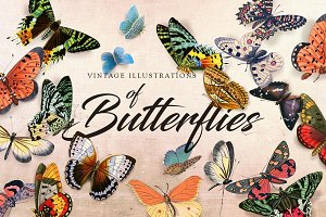 Vintage Illustration of Butterfly