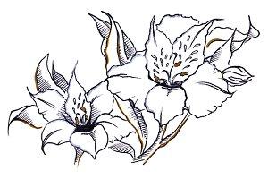 Monochrome alstroemeria flowers