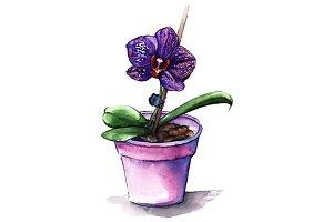 Violet phalaenopsis orchid flower