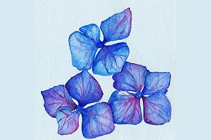 Watercolor blue violet hydrangea